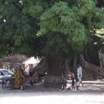 Meeting Tree Diembering, Casamance, Senegal